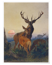 Premium poster  A Stag with Deer at Sunset - Charles Jones