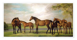 Premium poster Mares, foals and an approaching storm