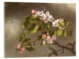 Acrylic print  Apple Blossoms and a Hummingbird - Martin Johnson Heade
