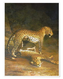 Premium poster  Two Leopards lying in the Exeter Exchange - Jacques Laurent Agasse