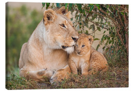 Canvas print  Mother love at the lion - Ingo Gerlach