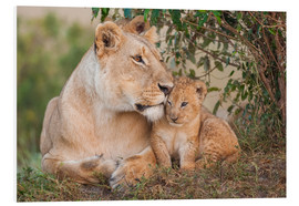 Foam board print  Mother love at the lion - Ingo Gerlach