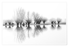Premium poster Willow trees in the mirror image of the flood