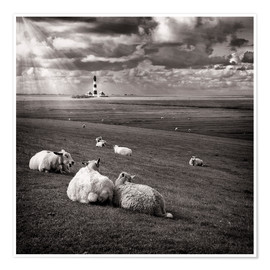 Premium poster  Talking Sheep - Carsten Meyerdierks