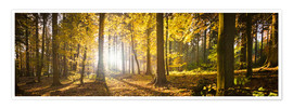 Premium poster Autumn forest backlit with sunshine and yellow autumn leaves