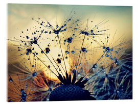 Acrylic print  Dandelion in the sunset - Julia Delgado