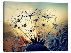 Canvas print  Dandelion in the sunset - Julia Delgado