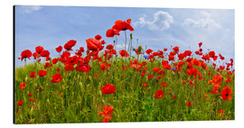 Aluminium print  Poppies Panoramic - Melanie Viola