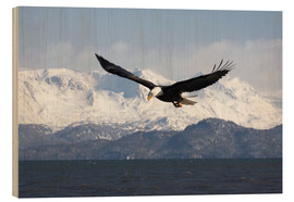 Wood print  Bald eagle in flight - David Northcott
