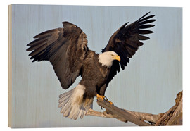 Wood print  Eagle with outstretched wings - Charles Sleicher
