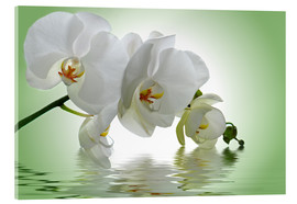 Acrylic print  Orchid with Reflection - Atteloi