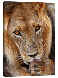 Canvas print  View of the lion - Africa wildlife - wiw