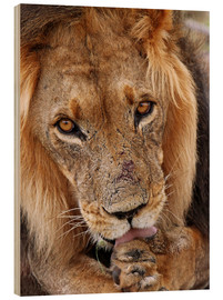Wood print  View of the lion - Africa wildlife - wiw