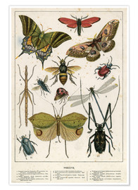 Premium poster  Insects - English School