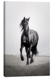 Canvas print  Horse Friesian in the steppe - Monika Leirich