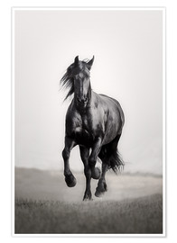 Premium poster  Horse Friesian in the steppe - Monika Leirich