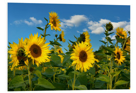 Foam board print  Sunflowers - Atteloi