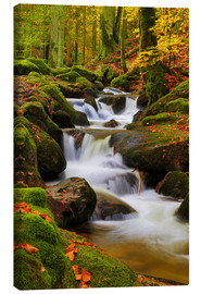 Canvas print  Autumn forest with brook - Thomas Herzog
