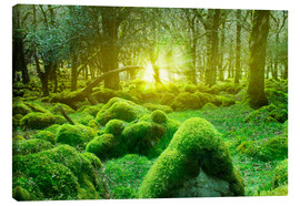 Canvas print  irish forest - Nadine Conrad