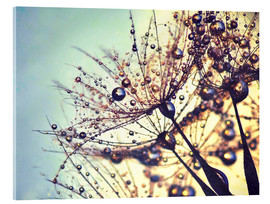 Acrylic print  Dandelion dream of colors - Julia Delgado