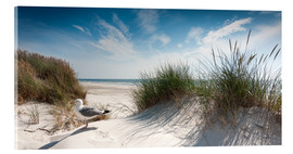 Acrylic print  Dune with fine beach grass and seagull, Sylt - Reiner Würz
