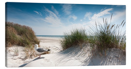 Canvas print  Dune with fine beach grass and seagull, Sylt - Reiner Würz