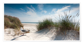 Premium poster  Dune with fine beach grass and seagull, Sylt - Reiner Würz