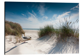 Aluminium print  Sylt - dune with fine beach grass and seagull - Reiner Würz