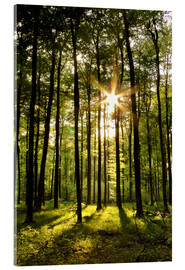 Acrylic print  Forest in Sunset - Renate Knapp