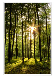Premium poster  Forest in Sunset - Renate Knapp