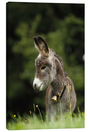 Canvas print  little donkey - Uwe Fuchs