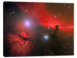 Canvas print  Horsehead Nebula, constellation Orion - Reinhold Wittich