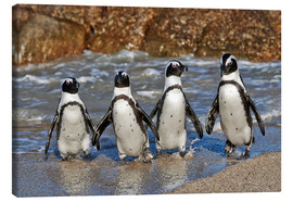 Canvas print  four cool waddling penguins - Jürgen Ritterbach