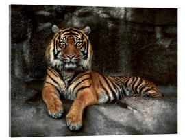 Acrylic print  king of the jungle - Joachim G. Pinkawa