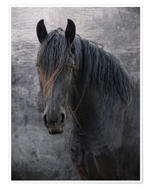 Premium poster Horse with no name