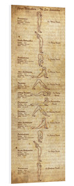 Foam board print  Surya Namaskara the sun salutation(vertical) yoga poster - Sharma Satyakam