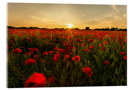 Acrylic print  Field of poppies - Oliver Henze