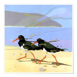 Premium poster  Shorebirds 2