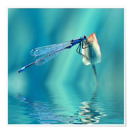 Premium poster  Dragonfly with Reflection - Atteloi