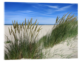 Acrylic print  thriving beach grass in the dunes - Susanne Herppich