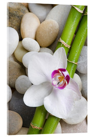 Acrylic print  Bamboo and orchid - Andrea Haase Foto