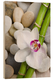 Wood print  Bamboo and orchid - Andrea Haase Foto