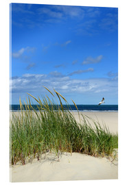 Acrylic print  Dune with seagull - Susanne Herppich