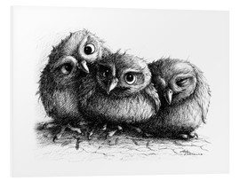 Foam board print  Three young owls - owlets - Stefan Kahlhammer