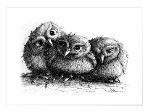 Premium poster Three young owls - owlets