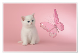 Premium poster Kitten with Pink Butterfly