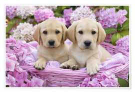Premium poster  Labrador puppies in a basket - Greg Cuddiford