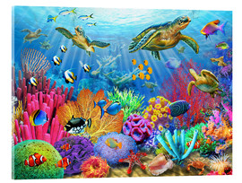 Acrylic print  Turtle coral reef - Adrian Chesterman