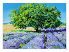 Premium poster  Tree and Lavenders - Jean-Marc Janiaczyk