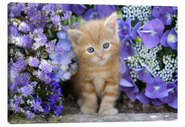 Canvas print  Ginger cat in flowers - Greg Cuddiford